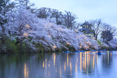 Light up of Takada Castle and Cherry blossoms Royalty Free Stock Images