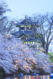 Light up of Takada Castle and Cherry blossoms Royalty Free Stock Image