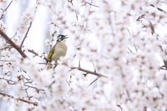 Bird in flowers royalty free stock image