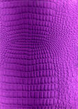 Light violet reptile leather imitation texture Royalty Free Stock Image