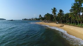 Aerial of sandy beach with palm trees, which is washed by sea on a sunny day in Sri Lanka. Light waves washing the long sandy beach with palm trees and boats on stock video