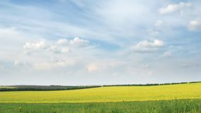 Light white clouds move across the sky over a field of spring. stock footage