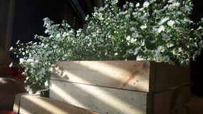 Light on white flowers in wooden box Royalty Free Stock Photography