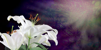 Into the Light with White Lilies. White lilies on left hand side with purple and green energy formation and soft light coming from top right hand corner Royalty Free Stock Photography