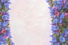 Light white toned colorful trendy painted pink-lilac textured background with wild forested lungwort. Light white toned colorful trendy painted pink-lilac Royalty Free Stock Photos