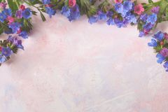 White toned colorful trendy painted pink-lilac textured background with wild forested lungwort on the top. Light white toned colorful trendy painted pink-lilac Royalty Free Stock Photography