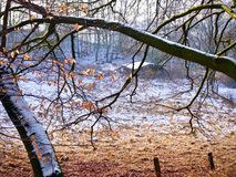 Light winter snow fall on rural farmland viewed through the branches Royalty Free Stock Photos