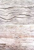 Light wood set background. Texture of the old dried up by the sun, heat and wind of the tree. The wood of fallen trees on the shor Royalty Free Stock Image