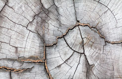 Light wood texture Royalty Free Stock Photo