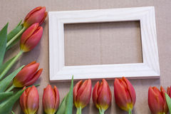 Light wooden frame with many red tulips Stock Photo
