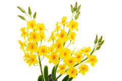 Light yellow orchid handmade flowers isolated on white backgroun Stock Photo