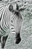 Light Zebra Stock Photography
