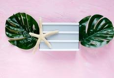 Lightbox vazio branco, folha do monstera, estrela do mar no fundo cor-de-rosa Configuração do plano da forma do verão Férias, con fotos de stock royalty free