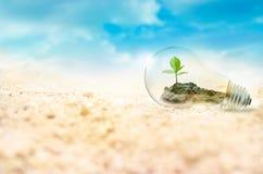 Lightbulb με το πράσινο δέντρο μέσα στο υπόβαθρο ερήμων, έννοια περιβάλλοντος Στοκ Φωτογραφίες