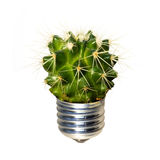 Lightbulb. Made of green cactus. isolated on white Stock Image