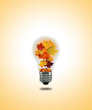 Lightbulb autumn Stock Images
