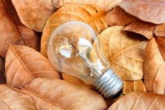Lightbulb on dry leaf. The lightbulb on dry leaf Royalty Free Stock Photos