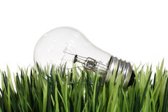 Lightbulb in the Grass Royalty Free Stock Image