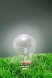 Lightbulb on green grass. With green background royalty free stock images