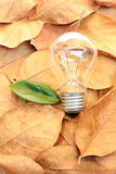 Lightbulb with green leaves Stock Photos