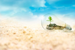 Lightbulb with green tree inside on desert background, environment concept Stock Photos