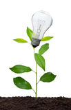 Lightbulb growing Royalty Free Stock Images