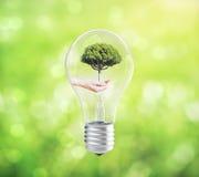 Lightbulb with hand holding tree inside Stock Photos