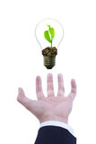 Lightbulb in hand Stock Photography