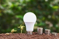 lightbulb med att växa för växt och pengarbunt på jord cocept sav Royaltyfria Foton