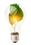Lightbulb with plant. Growing inside Royalty Free Stock Images