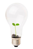Lightbulb with plant. Growing inside Royalty Free Stock Image
