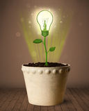 Lightbulb plant coming out of flowerpot Royalty Free Stock Photos