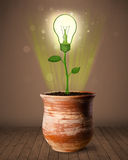 Lightbulb plant coming out of flowerpot Stock Photos