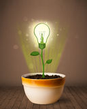Lightbulb plant coming out of flowerpot Royalty Free Stock Photo