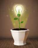 Lightbulb plant coming out of flowerpot Stock Photography