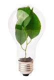 Lightbulb with plant growing inside Stock Photos