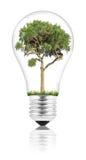 Lightbulb Stock Photo
