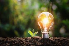 lightbulb with small plant on soil and sunshine. concept saving energy