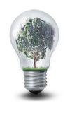 Lightbulb Tree Stock Photos