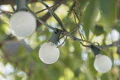 Lightbulbs hanging outdoor Stock Photo
