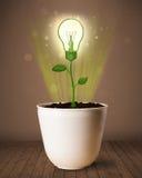 Lightbulbväxt som kommer ut ur blomkrukan Arkivfoto