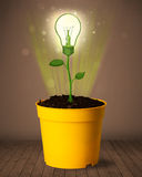 Lightbulbväxt som kommer ut ur blomkrukan Arkivbild