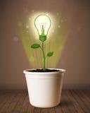 Lightbulbväxt som kommer ut ur blomkrukan Royaltyfri Bild