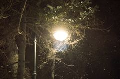 lighted lantern at night, the snow and trees in winter Park Royalty Free Stock Image