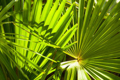 Lighted palm leaves. royalty free stock photos