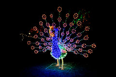 Lighted peacock display Royalty Free Stock Image