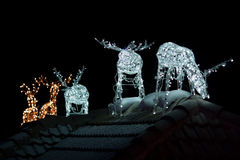 Lighted Reindeers for Christmas. Image of Christmas decoration in the form of reindeers at night Royalty Free Stock Photography