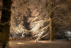 Lighted tree with snow Royalty Free Stock Image
