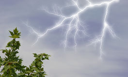 Lightening in Sky. Lightening striking near tree branch. Shot with Canon 20D Stock Photography