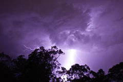 Lightening Strikes behind gumtrees. Sydney, Australia, an electrical storm in the bush Stock Images